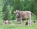 St. Moritz Hike-53 (9709772164).jpg