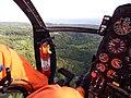 Starr-141014-2176-Caesalpinia decapetala-aerial view-Kakipi Gulch Haiku-Maui (24951575600).jpg