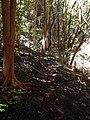 Starr 040912-0037 Psidium cattleianum.jpg