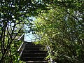 Steps from Bridleway up to path through old quarry workings. - geograph.org.uk - 545804.jpg