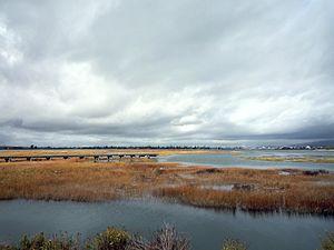Arrowhead Marsh - Arrowhead Marsh
