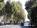 Strade di Roma.... - panoramio.jpg