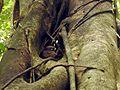 Sulawesi trsr DSCN0270 v1.JPG