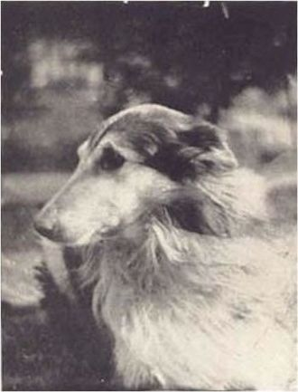 Lad, A Dog - Profile shot of Sunnybank Lad, as seen on a rare postcard printed by Sunnybank in the early 1900s