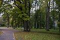 Suure-Kõpu mõisa park, 2014.jpg