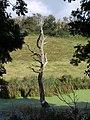 Swamp thing, Okenbury - geograph.org.uk - 1512119.jpg
