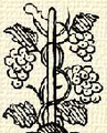 Szőlőtőke (,,heraldika).PNG