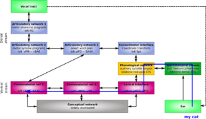 Two-streams hypothesis - comprehension of the phrase 'my cat' in the extended version of Hickok and Poeppel's dual pathway model