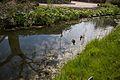 TU Delft Botanical Gardens 58.jpg