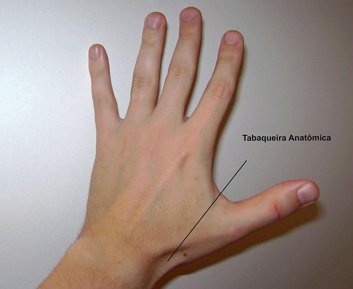 Tabaquera anatómica - Wikipedia, la enciclopedia libre