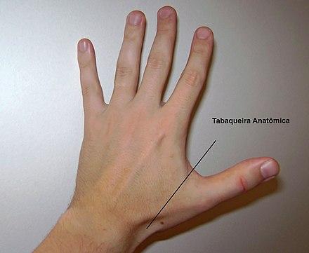 Tabaquera anatómica - Wikiwand