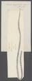 Taenia crassicollis - - Print - Iconographia Zoologica - Special Collections University of Amsterdam - UBAINV0274 105 19 0016.tif