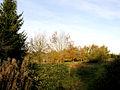 Tair Onen woodland - geograph.org.uk - 275415.jpg