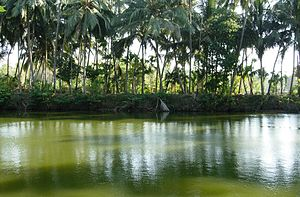 Killikkurussimangalam - Temple pond