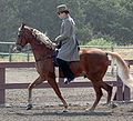 Tennessee Walking Horse4.jpg