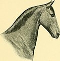 The Horse - its treatment in health and disease, with a complete guide to breeding, training and management (1905) (14764122025).jpg