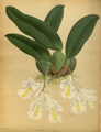 The Orchid Album-01-0056-0018.png