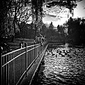 The Pond (90594679).jpeg