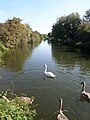 The River Stort (Herts bank).jpg