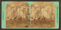 The Swings, Rocky Point, from Robert N. Dennis collection of stereoscopic views.png