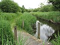The Ted Ellis Nature Reserve - Penguin Dyke - geograph.org.uk - 1341536.jpg