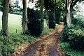 The driveway to Ladye Grove, Birley Hill - geograph.org.uk - 1199098.jpg