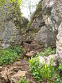 The narrow path through Ebbor Gorge - geograph.org.uk - 1287073.jpg