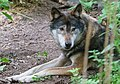 The wolf-1946 (14819586617).jpg