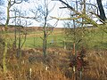 Through a shelterbelt. - geograph.org.uk - 143903.jpg