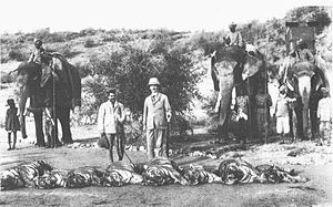 Project Tiger - Tiger hunt by Rufus Isaacs, former Viceroy of British India