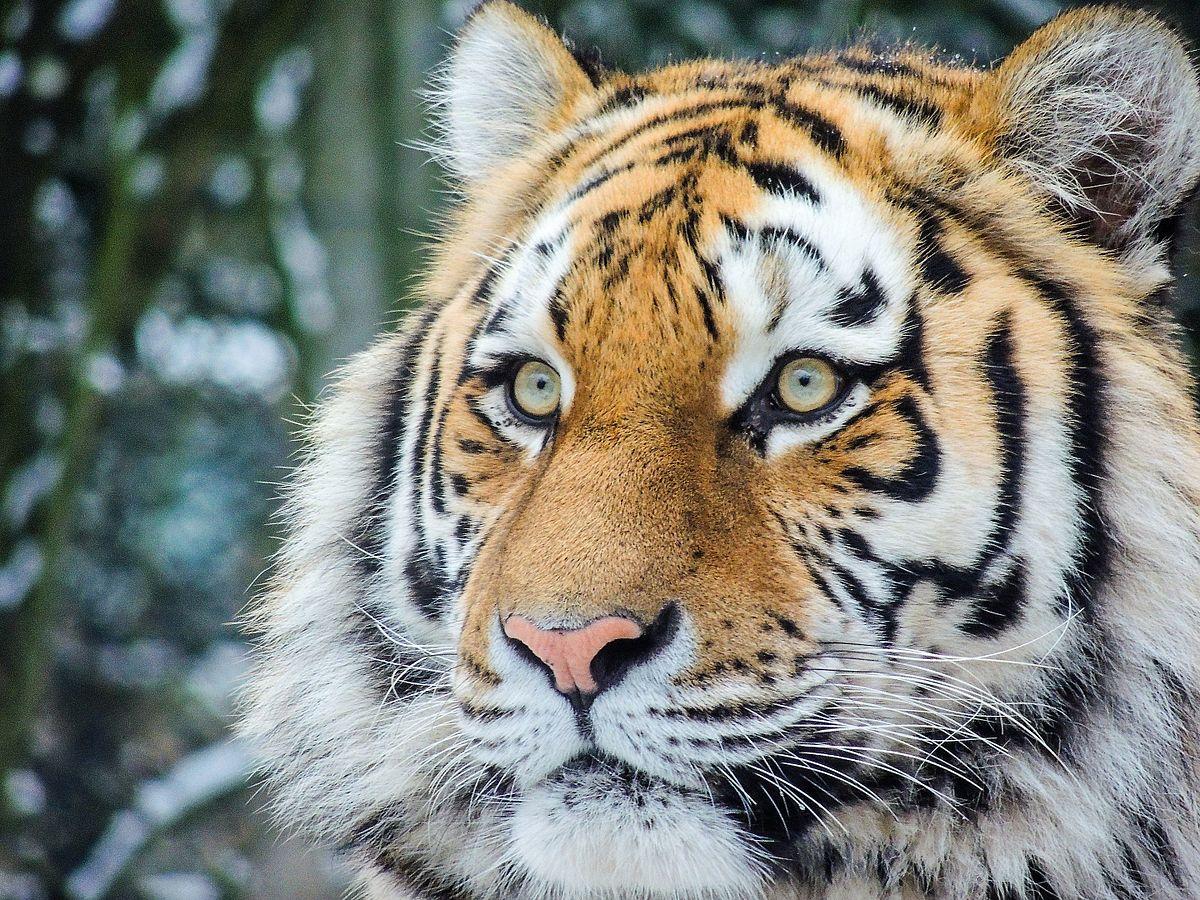 Dierenpark Amersfoort Wikipedia