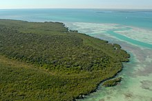 Aerial view of island and forest