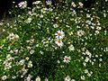 Touffe de fleurs (6112589762).jpg