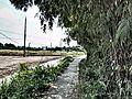 Trường Bình, Cần Giuộc, Long An, Vietnam - panoramio (11).jpg