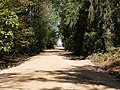 Track in the Hambach forest 12.jpg