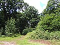 Track into Spoonhill Wood, Shropshire - geograph.org.uk - 489150.jpg