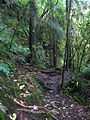 Track near Whispering Falls - panoramio.jpg