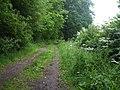 Track next to Saltmarshe Delph - geograph.org.uk - 1366423.jpg