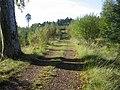 Track through Long Plantation - geograph.org.uk - 259023.jpg