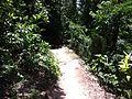 Trail - panoramio (8).jpg