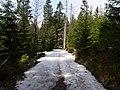 Trail near Sonnenkappe 02.jpg