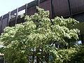 Tree.3401.JPG