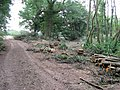 Tree clearance in Cottage Wood - geograph.org.uk - 1390187.jpg