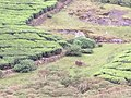Trials of megamalai trekking.jpg