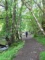 Tryweryn Trail - geograph.org.uk - 433652.jpg