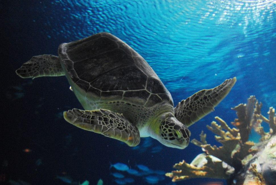 TurtleOmaha