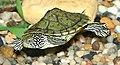 Turtle (20396312).jpg