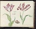 Twee tulpen met schelp en stel parende waterjuffers La belle Grebielle Morrillion Vrucht (titel op object), RP-T-1950-266-30-2.jpg