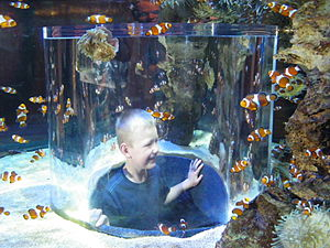 Two Oceans Aquarium - Anemonefish in Two Oceans Aquarium