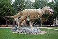 Tyrannosaurus Senckenberganlage.jpg